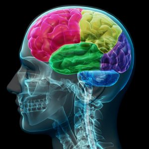 Cognitive Neuroscience Writing Services